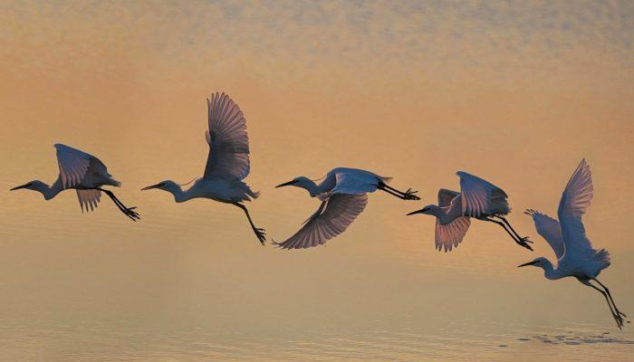 tailor-made travel as Fly Bird