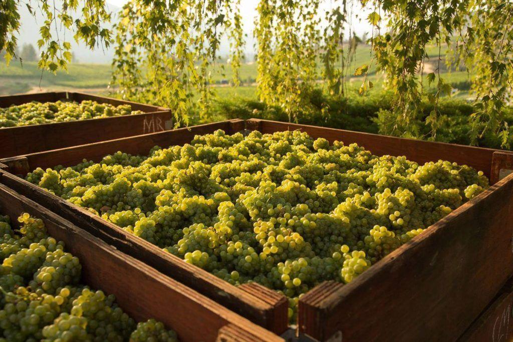 blue-mountain-vineyard-