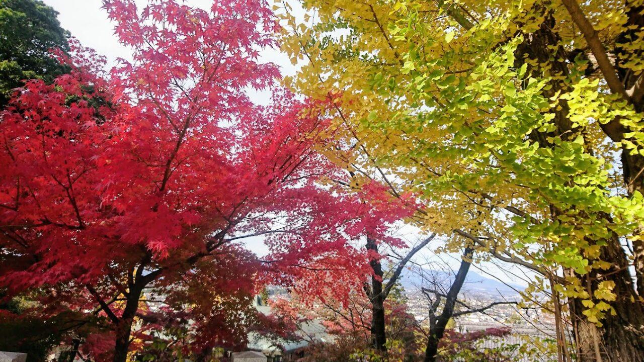 高台の紅葉